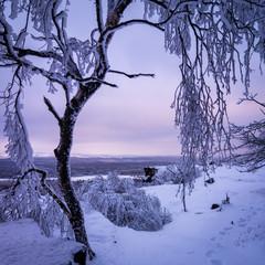 Morning snowy landscape
