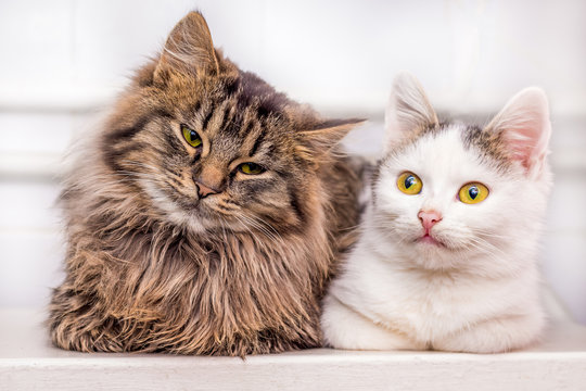 Two young kittens sit together one by one_