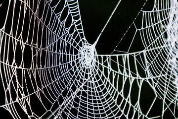 Big old spider web