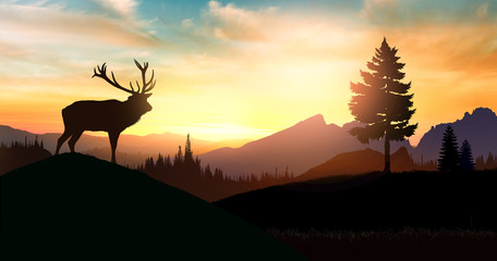 Adult deer in the woods observes the sunset