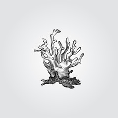 Hand Drawn Coral Sketch Symbol isolated on white background. Vector of Underwater world elements In Trendy Style. Engraving style pen pencil crosshatch.