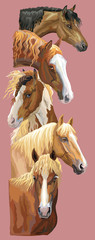 Postcard with horses 4