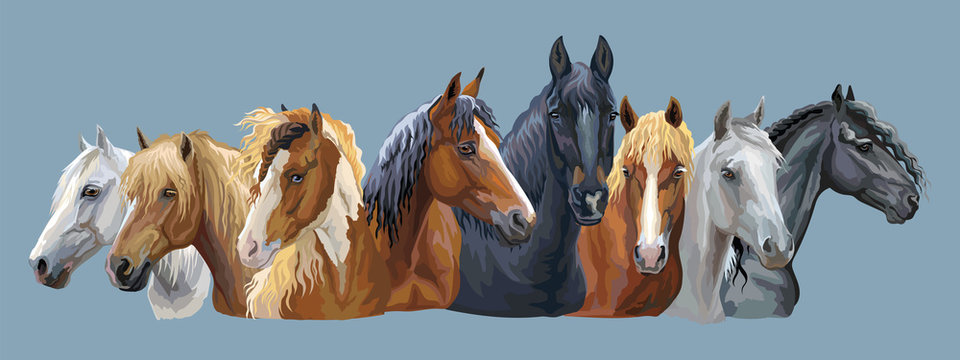 Set of horses breeds 7