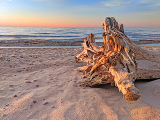 Wall Mural - Beach Driftwood Sunset Michigan