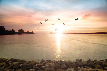 Wall Mural - The freedom of birds,freedom concept..Silhouette flock of birds flying in v shaped over the sea at sunset,lens flare effect.