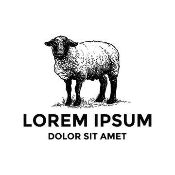 Hand Drawn Sheep Logo Template
