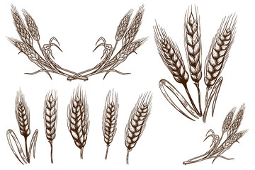 Set of wheat spikelet illustrations on white background. Design element for poster, card, banner, flyer.