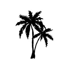 Hand drawn palm trees isolated on white. Vector illustration