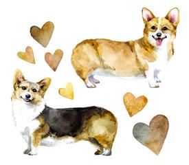 Watercolor dog corgi with hearts - Illustration