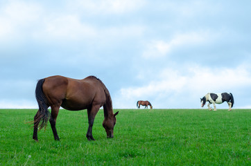 Horses and a pony grazing in a green field in Cotswold, England