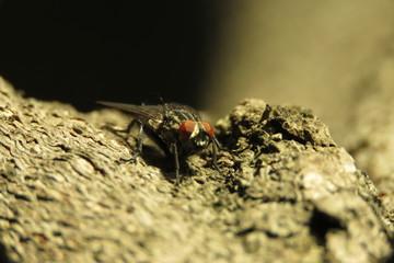 fly macro photo