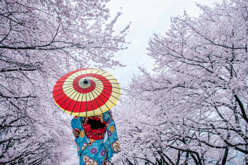 Asian woman wearing japanese traditional kimono and cherry blossom in spring, Japan. Fototapete
