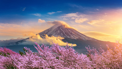 Fuji mountain and cherry blossoms in spring, Japan. Fototapete