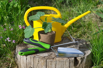 Pumpkin seedlings in a peat pot, watering can and garden tools on a wooden stump in the garden