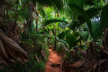 Forêt tropicale de la Vallée de Mai sur l'île de Praslin, Seychelles
