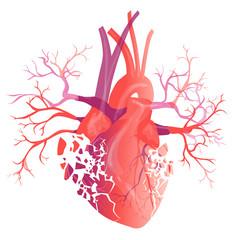 Vector realistic Human heart. Anatomy concept. illustration