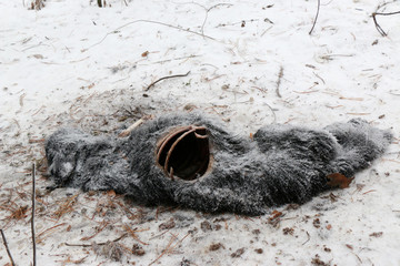 a terrible find outside city in winter, on side of road lie frozen stiffened corpses of stray dog
