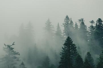 Papiers peints Forets Misty mountain landscape