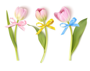 Set of decorative flowers isolated on white background. Vector pink tulip with bows for spring holidays decor