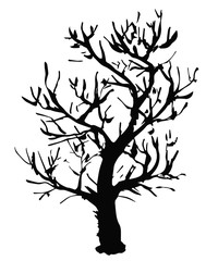 Black vector outline of a deciduous tree without leaves is a simple curved object that is isolated on a white background.