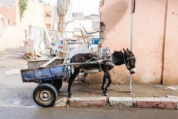 Fotobehang Ezel donkey in Marrakech, Morocco