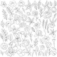 flowers and leaves, vintage vector floral set