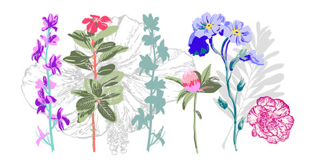 set of hand drawing botanical floral elements - wild flowers