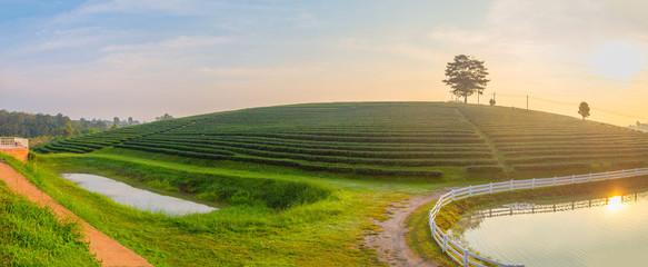 A beautiful sunrise at Chui Fong tea plantation, Chiang Rai, Thailand
