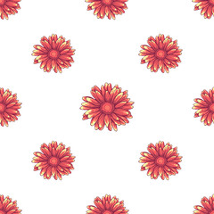 Seamless pattern with pink daisy flowers on white background