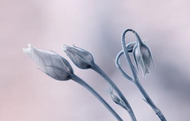 Leinwandbilder - Kwiaty w pąkach