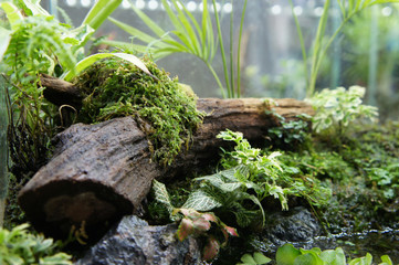Selected focused of aquascape and terrarium design in small glass aquarium displayed for the public.  Wall mural