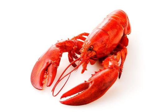 ロブスター Lobster