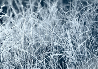 Frosty morning in the meadow