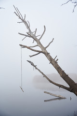 abandoned swing on a tree near a lake in autumn
