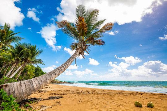 Exotic carribean shore of Puerto Rico Flamenco beach