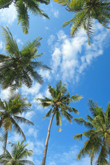 Palm trees and blue sky bottom view