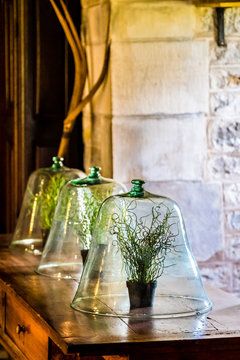 Décoration d'intérieur, cloche en verre avec plante verte