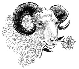 Ram eating a flower. ink black and white sketch