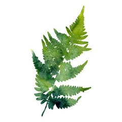 watercolor fern leaf silhouette