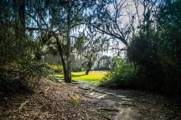 Huge old Oak Trees in Avery Island, Louisiana