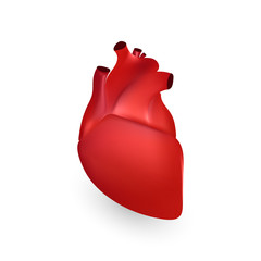Human heart anatomy. Illustration isolated on white background. Graphic concept for your design
