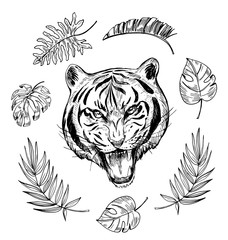 Sketch of angry tiger with tropical leaves. Hand drawn illustration converted to vector