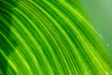 Texture of a green tropical leaf close up, macro