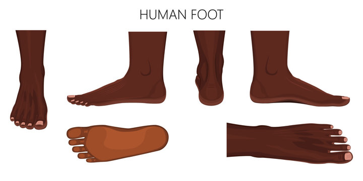 Different views of afro american human foot (front, back, side, lateral, medial, dorsal and plantar) isolated on white background. Vector illustration for medical (health care) use. EPS 10.