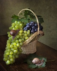 Still life with grapes and snails