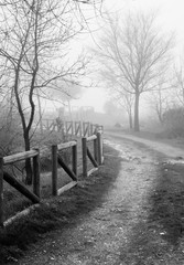 path in the mist