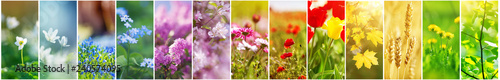 Wall mural Beautiful collage of flowers on the field