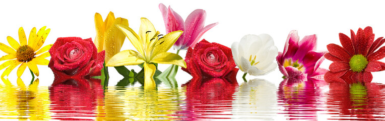 image of beautiful flowers above the water