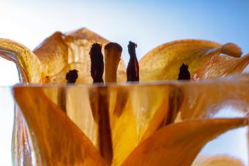 Lilie in kristallklarem Eis 1