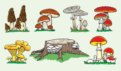 Set of different mushrooms illustration - Vector